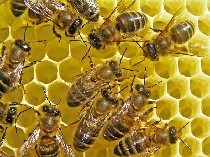 alvéoles abeilles figure geometrique